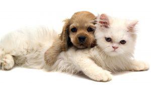 Cachorro e gato uso da ração apropriada