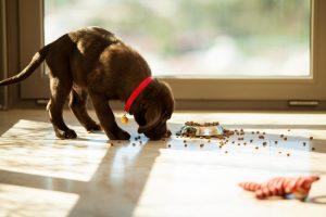 Cachorro comendo uma ração de ótima qualidade