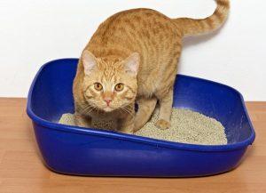 Como retirar o mau cheiro de gato do apartamento?