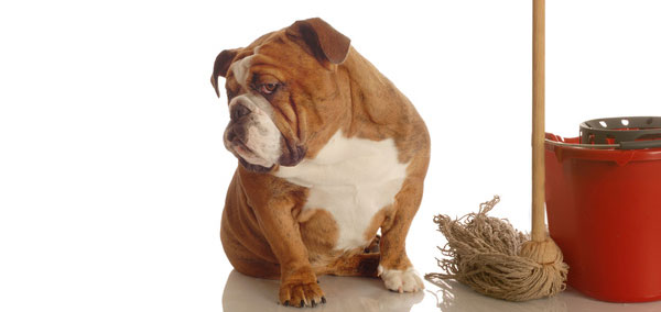 Cheiro de fezes de cachorro