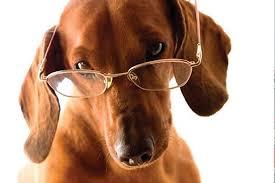 Cachorro de óculos
