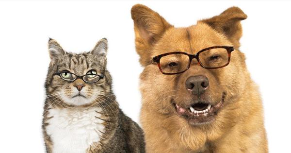 cachorro de oculos