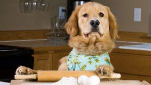 Alimentação saudável para seu animal: O que cachorro pode comer além da ração?