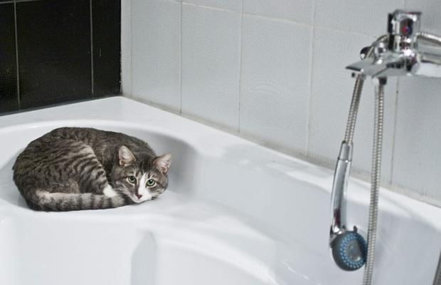 Como dar banho em seu gato?
