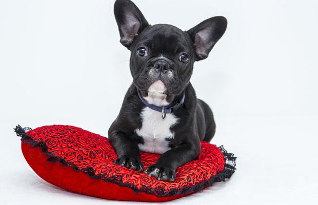 Saiba como fazer uma cama de cachorro de maneiras simples
